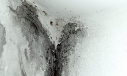 how to clean and avoid black mold